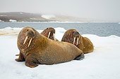 MAM 03 SK0013 01