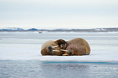 MAM 03 SK0014 01