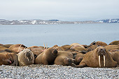 MAM 03 SK0016 01