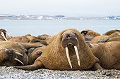 MAM 03 SK0018 01