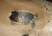 MAM 03 JM0034 01