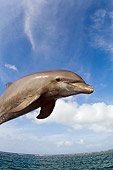 MAM 03 JM0042 01