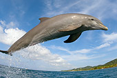 MAM 03 JM0043 01