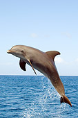MAM 03 JM0044 01