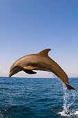 MAM 03 JM0045 01