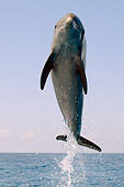 MAM 03 JM0047 01