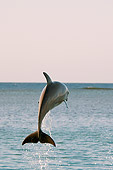 MAM 03 JM0048 01