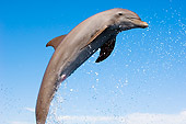 MAM 03 JM0051 01