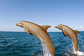 MAM 03 JM0052 01