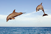 MAM 03 JM0053 02
