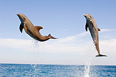 MAM 03 JM0053 03