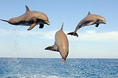 MAM 03 JM0056 01