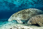 MAM 03 JM0076 01
