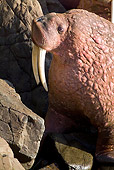 MAM 03 JM0083 01