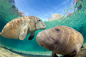 MAM 03 JM0089 01