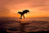 MAM 03 KH0001 01