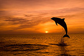 MAM 03 KH0003 01
