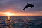 MAM 03 KH0004 01