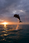 MAM 03 KH0006 01