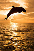 MAM 03 KH0008 01