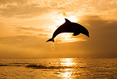 MAM 03 KH0009 01