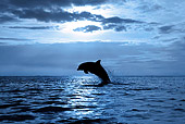 MAM 03 KH0010 01