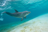 MAM 03 KH0019 01