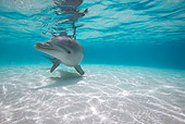 MAM 03 KH0020 01