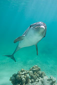 MAM 03 KH0023 01