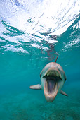 MAM 03 KH0026 01