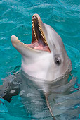 MAM 03 KH0027 01
