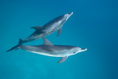 MAM 03 KH0032 01