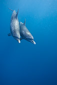 MAM 03 KH0034 01