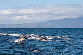 MAM 03 KH0037 01
