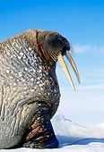 MAM 03 KH0040 01
