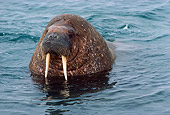 MAM 03 MR0001 01