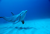 MAM 03 RD0021 02