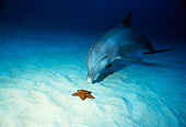 MAM 03 RD0023 01