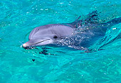 MAM 03 RK0009 34