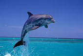 MAM 03 TL0002 01