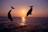 MAM 03 TL0006 01