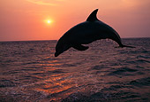 MAM 03 TL0007 01