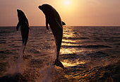 MAM 03 TL0008 01