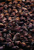 MAM 03 TL0009 01