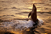 MAM 03 TL0017 01