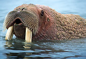 MAM 03 TL0018 01