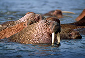 MAM 03 TL0019 01