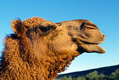 MAM 04 MH0002 01