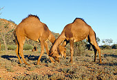 MAM 04 MH0005 01