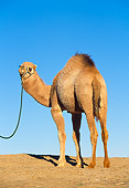 MAM 04 RK0004 23